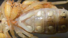 escorpiones arachnida como prevenir la plaga de