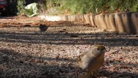 pajaros aves como eliminar los
