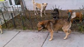 perros canis lupus informacion sobre