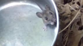 ratones mus como eliminar los