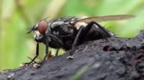 fliegen diptera wie kann man das bekampfen