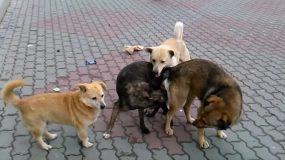 hunde canis lupus wie kann man das bekampfen