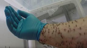 moskitos culicidae wie kann man das bekampfen