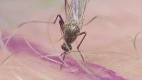 moskitos culicidae wie kann man ein Befall mit den verhindern