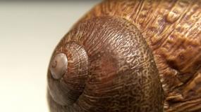 schnecken gastropoda wie kann man ein Befall mit den verhindern