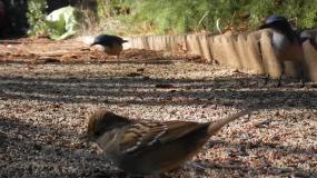 vogel aves wie kann man ein Befall mit den verhindern