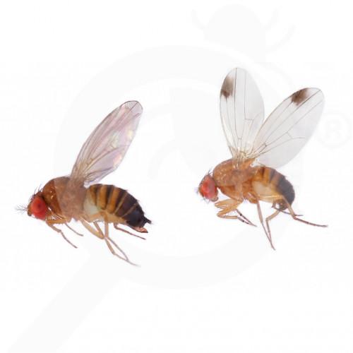 de russell ipm attractant pheromone lure drosophila suzukii 50 p - 0, small