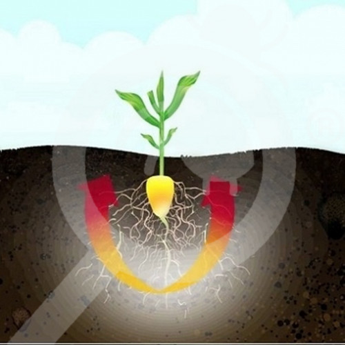 de oxon insecticide crop trika expert 1 kg - 0