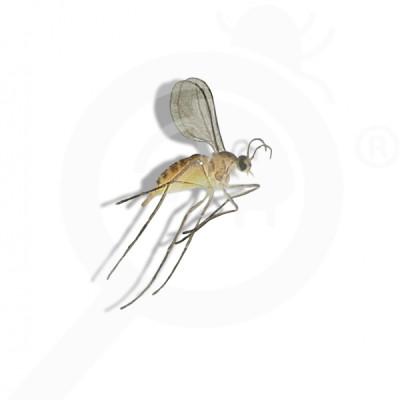 eu russell ipm pheromone lure dasineura oxycoccana 50 p - 0