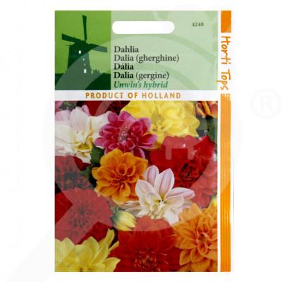 eu pieterpikzonen seed dahlia variabilis 0 75 g - 1