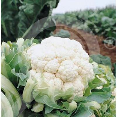 eu pieterpikzonen seed herfstreuzen 10 g - 1