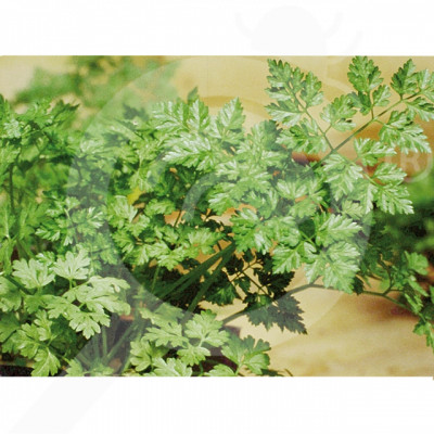 eu pop vriend seed commun parsley 1 kg - 2