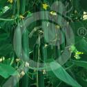eu pieterpikzonen seed marketeer 2 g - 1, small
