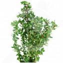 eu pieterpikzonen seed summer savory 2 g - 1, small