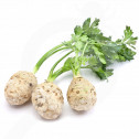 eu pieterpikzonen seed dolvi10 g - 1, small