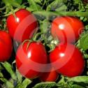 eu pieterpikzonen seed heinz 50 g - 1, small