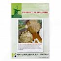 eu pieterpikzonen seed giant prague 10 g - 1, small