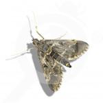 eu russell ipm pheromone lure duponchelia fovealis 50 p - 0, small