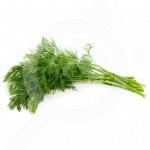 eu pieterpikzonen seed commun dill 50 g - 1, small