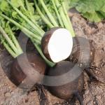 eu pop vriend seed ronde zwarte 250 g - 1, small