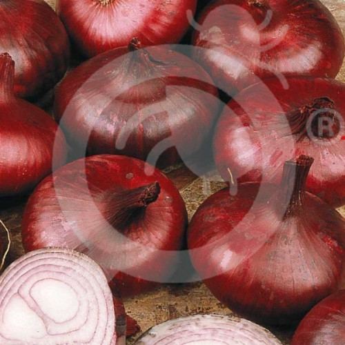 eu pieterpikzonen seed brunswick 25 g - 1, small