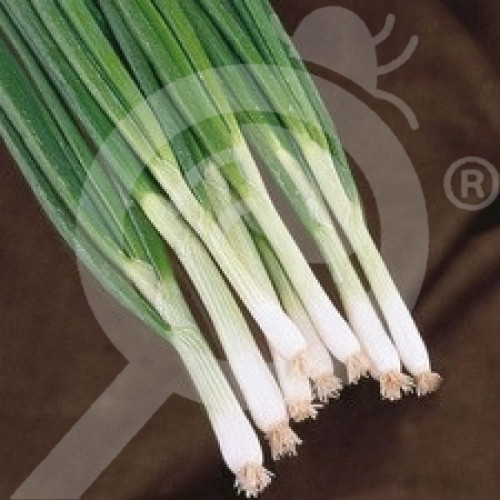 eu pieterpikzonen seed white lisbon 25 g - 1, small