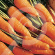 eu pieterpikzonen seed chantenay red cored 50 g - 2, small