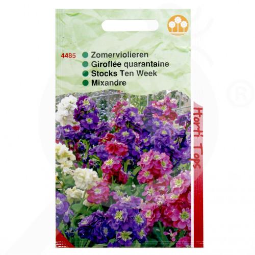 eu pieterpikzonen seed matthiola incana 0 5 g - 1