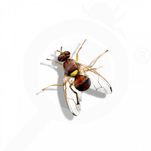 eu russell ipm attractant pheromone lure bactrocera zonata 50 p - 0
