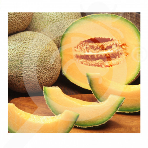 eu pop vriend seed melon ananas 250 g - 2