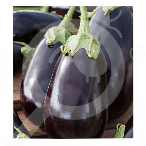 eu pieterpikzonen seed halflange violette 50 g - 2