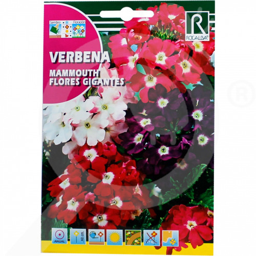fr rocalba seed verbena mammouth flores gigantes 1 g - 0, small