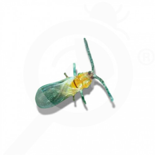 fr russell ipm pheromone aonidiella aurantii 50 p - 0, small