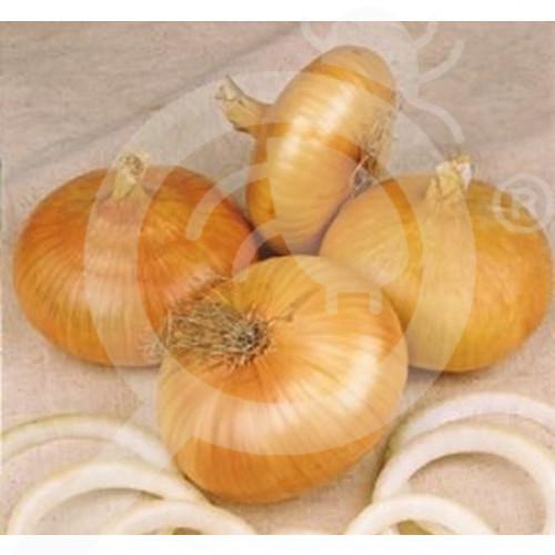 fr pieterpikzonen seeds noord holand stro gele improved 25 g - 1, small