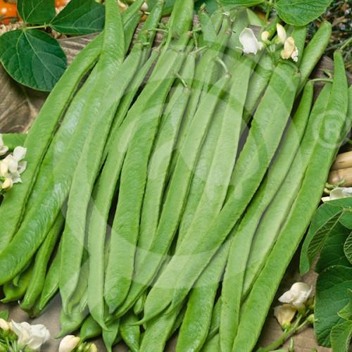 fr pop vriend seeds emergo 100 g - 1, small