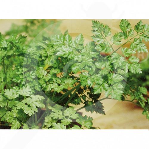 hu pop vriend seed commun parsley 500 g - 2, small