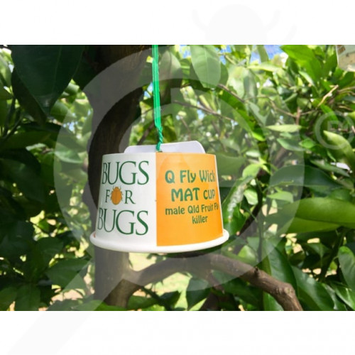 au bugs for bugs trap mat yellow cups set of 50 - 1, small