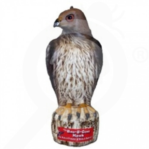 au bird b gone inc repellent red tailer hawk bird scarer - 1, small
