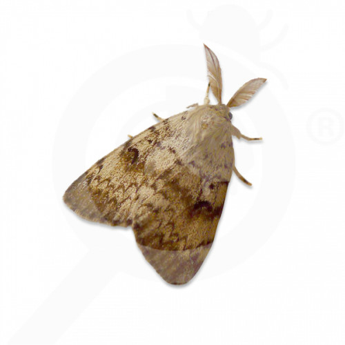 es russell ipm attractant pheromone lure lymantria dispar 50 p - 0, small