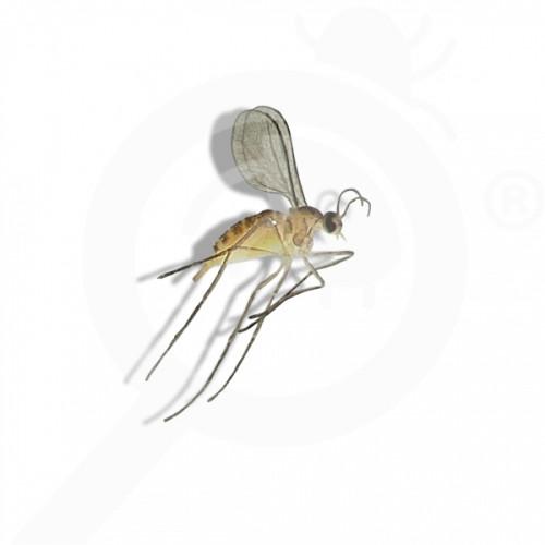 ro russell ipm pheromone lure dasineura oxycoccana 50 p - 1, small