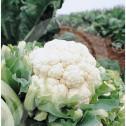 bg pieterpikzonen seed herfstreuzen 10 g - 1, small