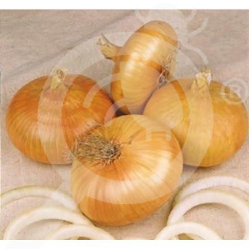 bg pieterpikzonen seed noord holand stro gele improved 25 g - 1, small