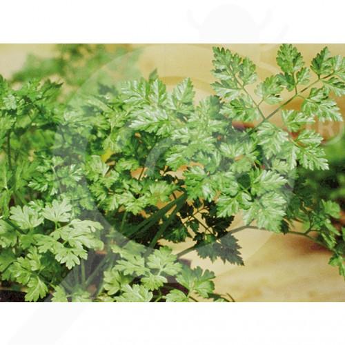 bg pop vriend seed commun parsley 500 g - 2, small