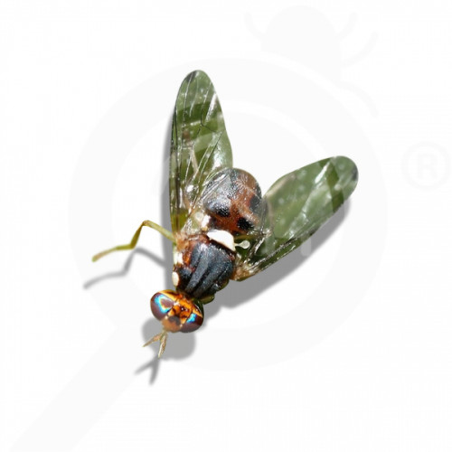bg russell ipm attractant pheromone lure bactrocera oleae 50 p - 0, small