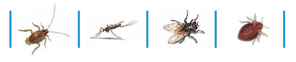insect spectrum of solfac ew 50