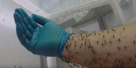 Комари Culicidae Как да се отървем от