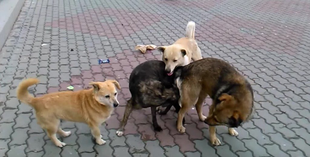 Кучета Canis lupus Как да се отървем от