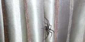 Паяци Araneae Информация за