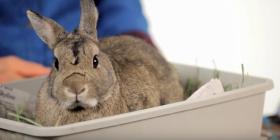 Зайци Oryctolagus Cuniculus Предотвратете инфестация от