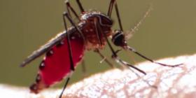 Комари Culicidae Предотвратете инфестация от